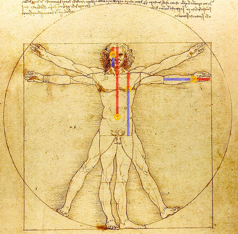 Lines overlaid on DaVinci's illustration show the golden ratio in the human face, hand, and torso
