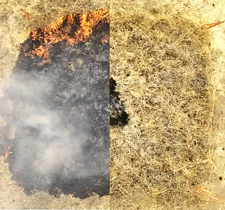 The untreated patch on the left is heavily burned, whereas the treated patch on the right is largely untouched by fire