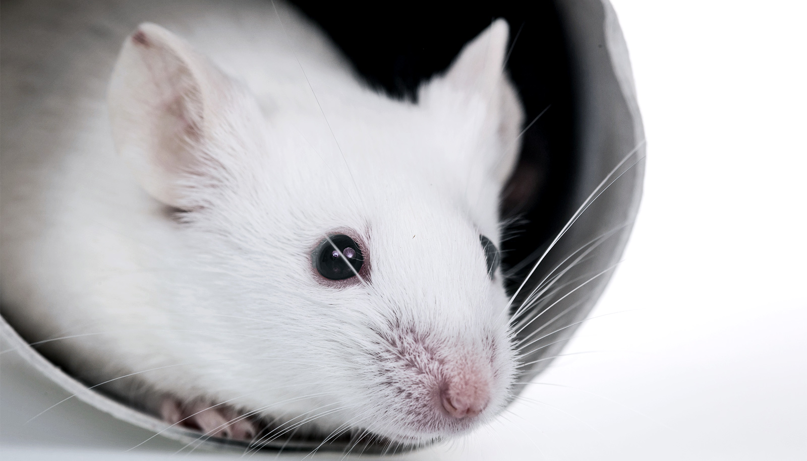 Depression circuit works differently in male and female mice