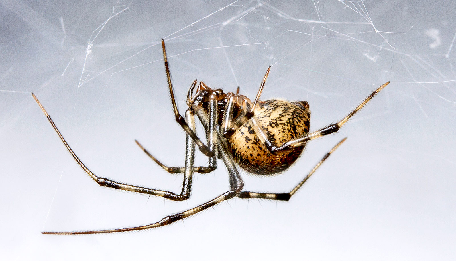 Listen: Expert debunks scary myths about spiders