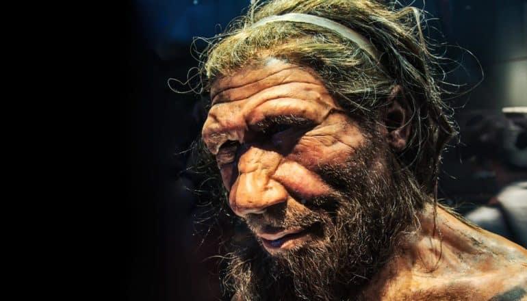 Neanderthal bust in museum
