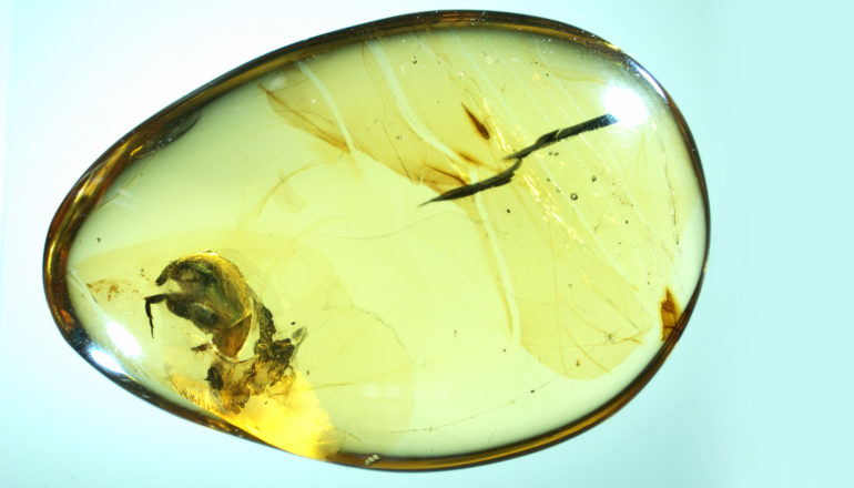 drop of amber with beetle inside