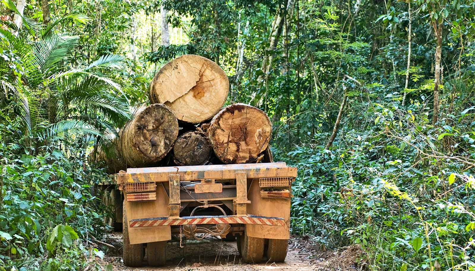 Loss of tropical forests will have 'terrifying' climate impact