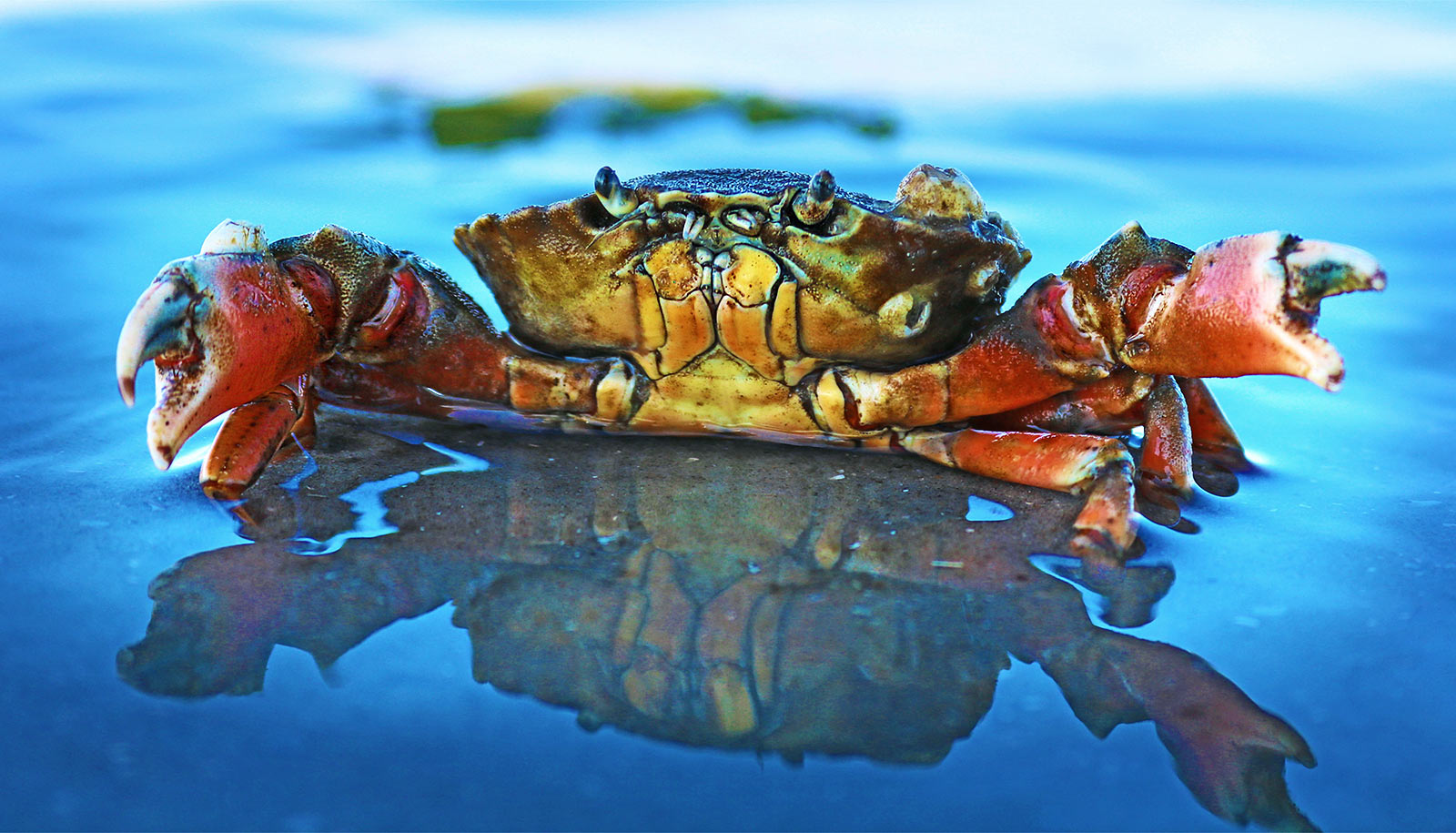 What crabs can tell us about brain 'building blocks'