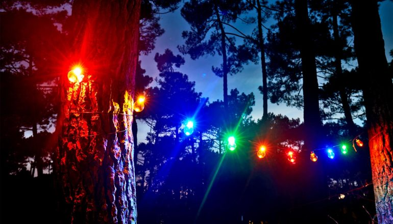 A string of colored lights hang between two trees in a forest at night