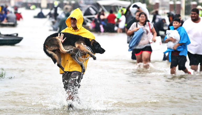 A man in a yellow rain coat carries his dog as he walks through knee-high water, with people walking through the water in the background