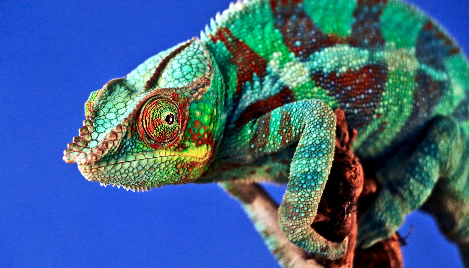 'Chameleon' metal changes in response to heat