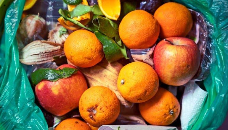 ok-looking apples and oranges in trash with peels, paper towels, etc.