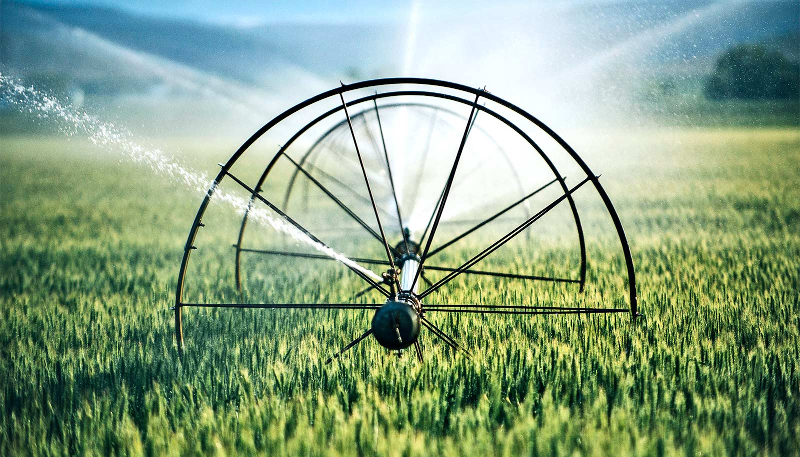 Irrigation keeps things cool in extreme heat