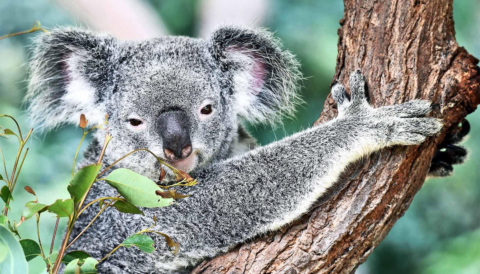 Focus on new 'umbrella' species could save more Aussie animals