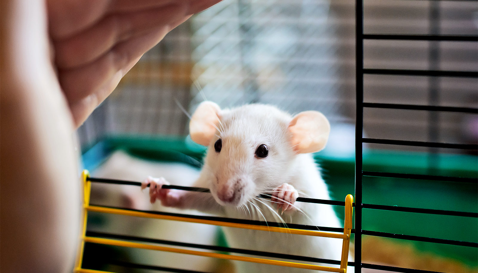 New approach prevents muscular dystrophy damage in mice - Futurity