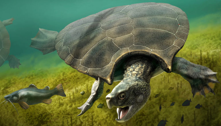 giant turtle swims under water, opens mouth near fish