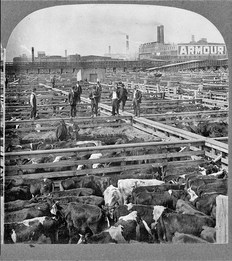 men stands on fence among many pens of cattle. Factory in background