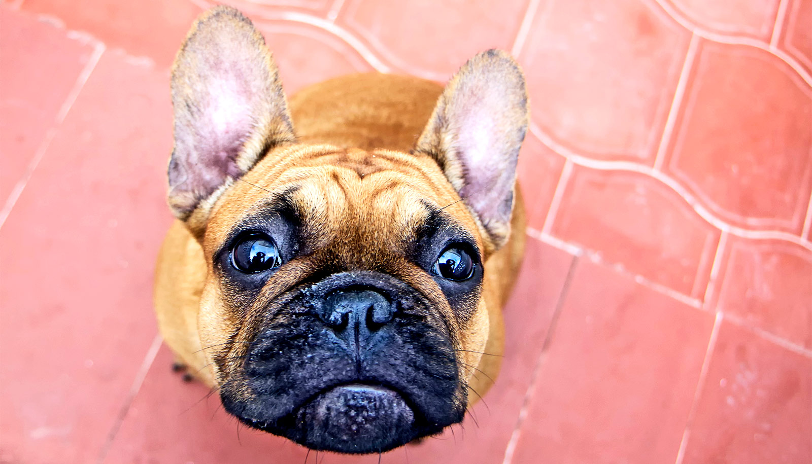Dogs Can Ease Your Self Quarantine Stress Futurity