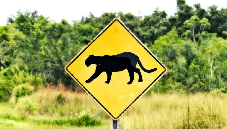 A yellow sign shows a mountain lion's silhouette in black