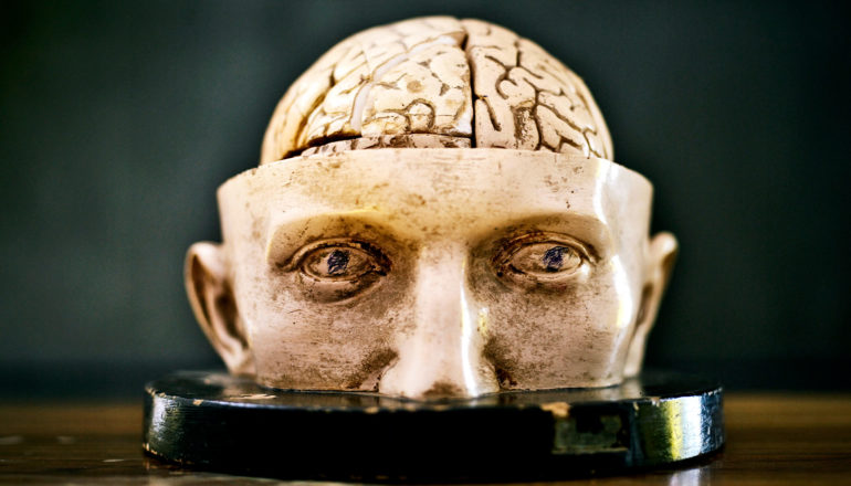 A model of half a face with an exposed brain sits on a table