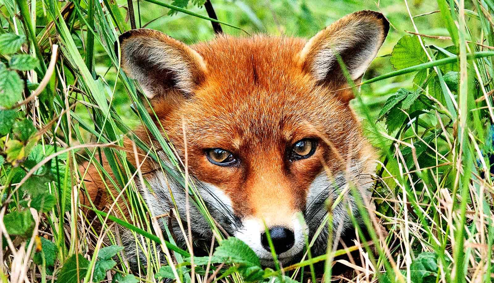 Free food lures wildlife to suburban backyards - Futurity