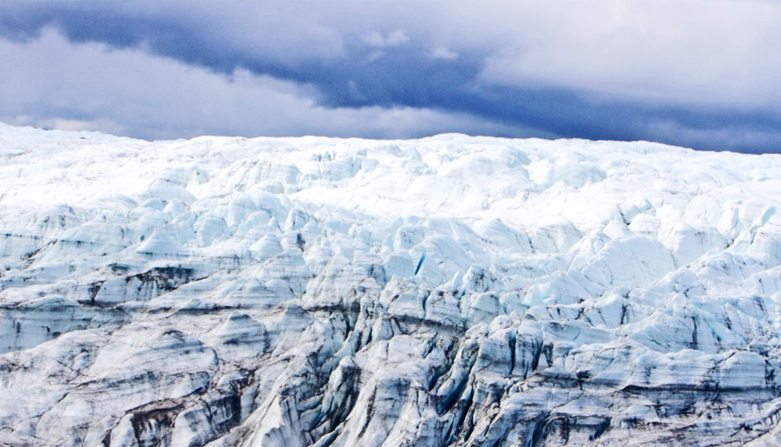 Team finds intact plant fossils under Greenland ice sheet