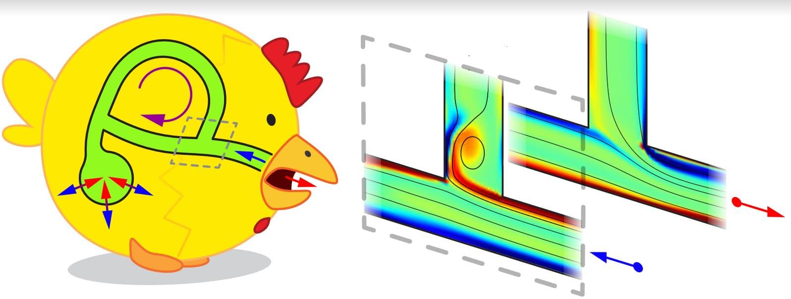 spherical cartoon chicken with looped airflow diagram overlay