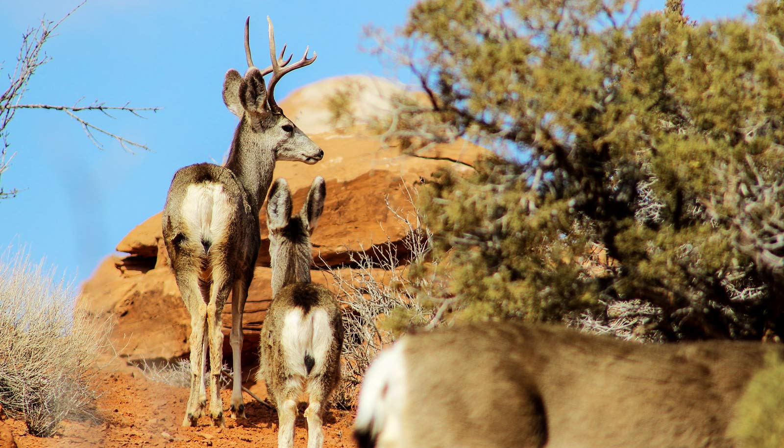Migration maps help protect the corridors herds need